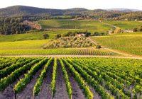 Субвенции за подигнување на нови овошни и лозови насади