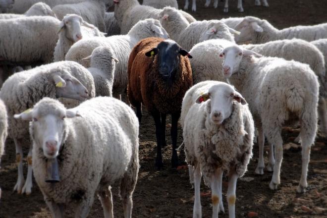 Photo of Забрана за увоз на говеда од Босна и Херцеговина поради заштита од син јазик