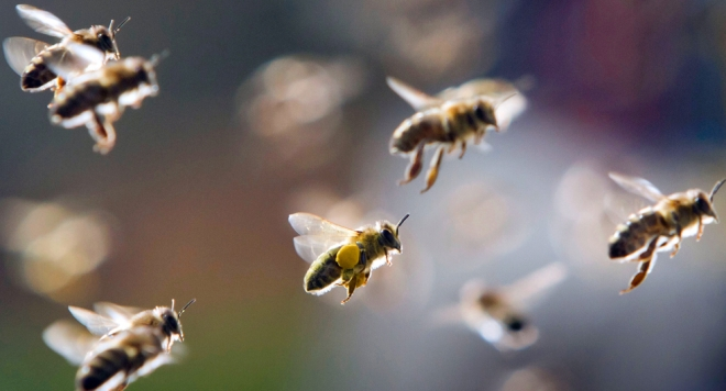 Photo of Благата зима ветува квалитетен мед