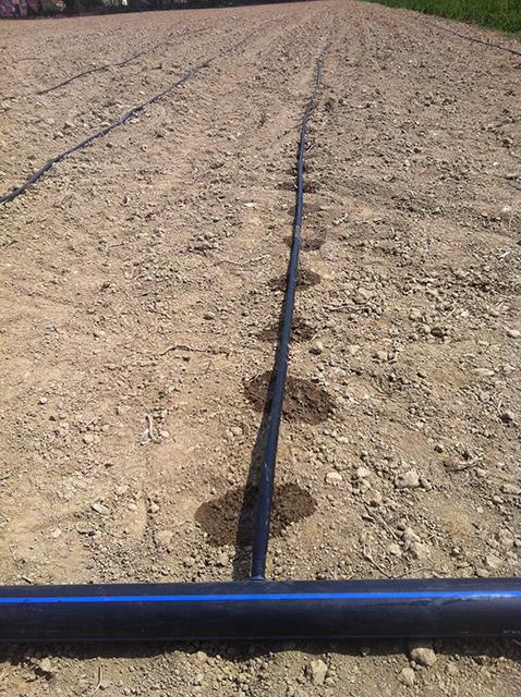"""Photo of До 31 март земјоделците аплицираат за повратни средства за системи """"капка по капка"""""""
