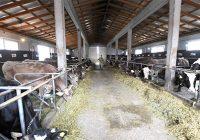 Категоризација на фармите за побезбедно млеко