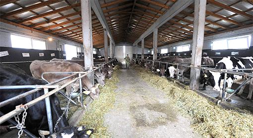 Photo of Категоризација на фармите за побезбедно млеко