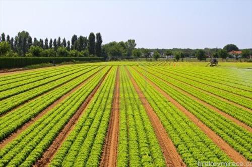 Photo of Намалени цените во земјоделството