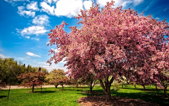 Некарактеристичните температури за овој период опасни за растенијата