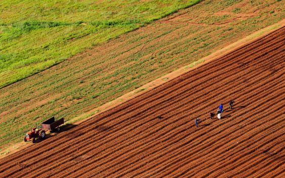 Под закуп ќе се даваат уште 7.000 хектари земјоделско земјиште