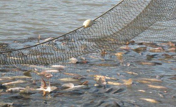 Повик за финансирање на рибарството