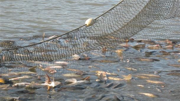 povik za finansiranje na ribarstvoto