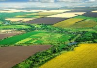 Сточарите ќе може да конкурираат за државни ниви за производство на сточна храна