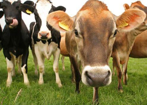 Субвенции за осигурување на добитокот