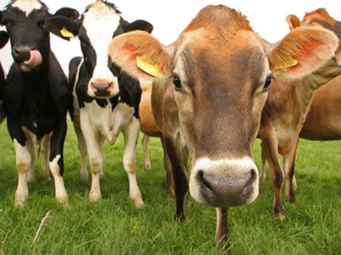 Photo of Субвенции за осигурување на добитокот