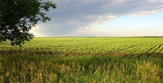 Дождот добредојден за земјоделските посеви