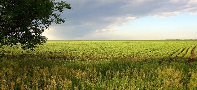 Photo of Дождот добредојден за земјоделските посеви
