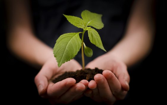 Кризата со почвата може да го погоди производството на храна