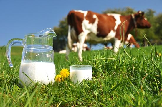 Photo of Млекопроизводителите поднесуваат барања за субвенции
