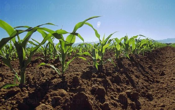 Над 240 хектари ќе бидат засеани во Дебар и Центар Жупа