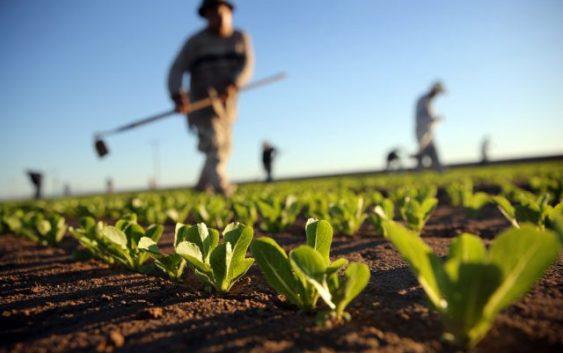 Науката, преку земјоделски советници, влегува во аграрот