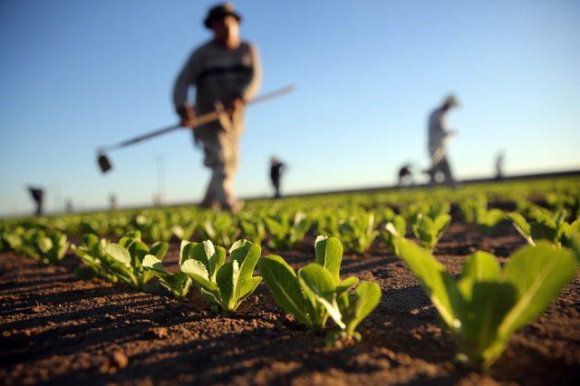 Photo of Науката, преку земјоделски советници, влегува во аграрот