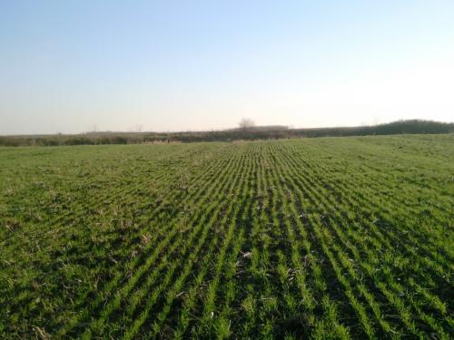 Photo of Објавен оглас за закуп на државно земјоделско земјиште до три хектари