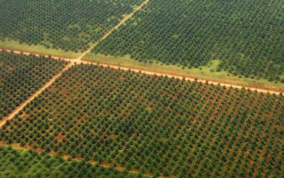 Пет милиони евра преку ИПА за консолидација на земјиштето