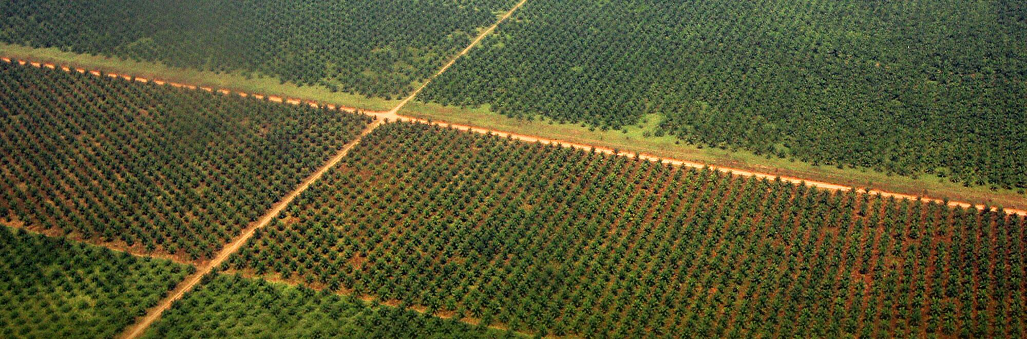 Photo of Пет милиони евра преку ИПА за консолидација на земјиштето