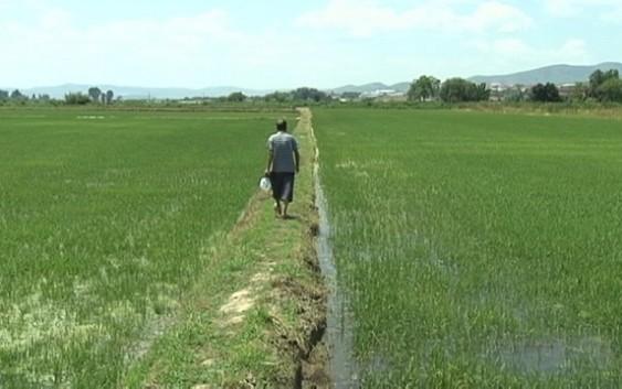 Photo of Почнува сеидбата на оризот