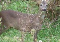Под концесија се нудат пет ловишта во Струга, Делчево и Кочани