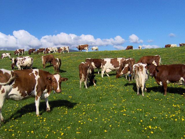 Photo of Поддршка од 80 отсто за набавка на високоприносен добиток
