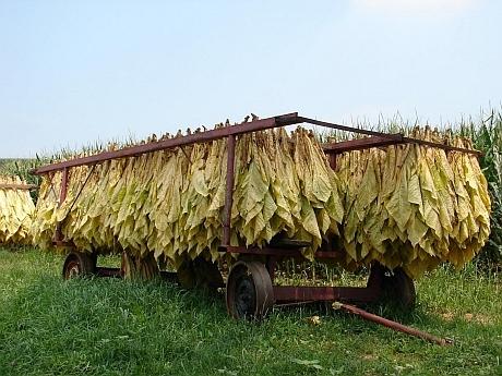 Се договара новото производство на тутун