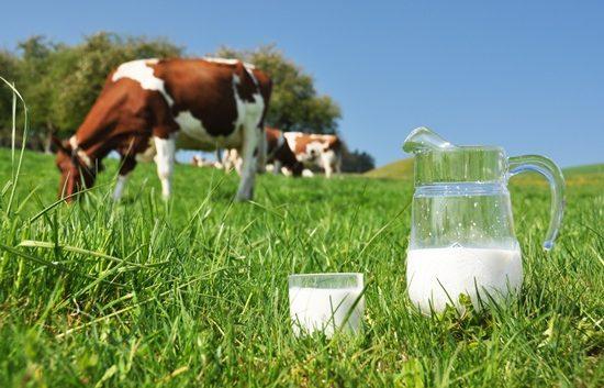 Зошто полномасното млеко е покорисно од нискомасленото?