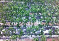 Јавен повик за пријавување штети во земјоделството