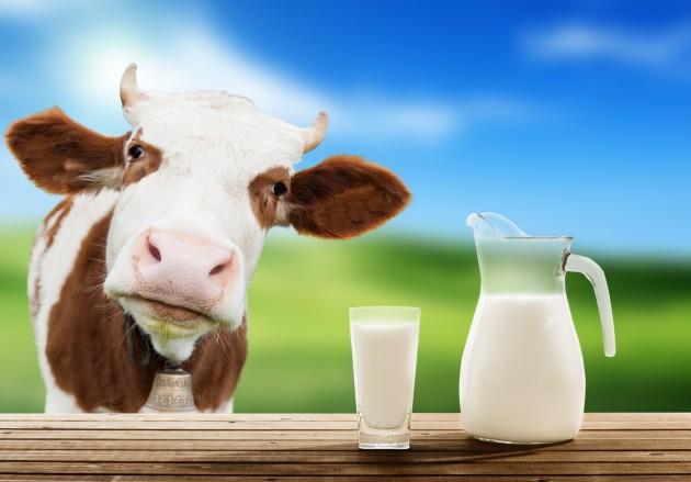 na 15 maj zavrshuva rokot za baranje subvencii za mleko i nesilki
