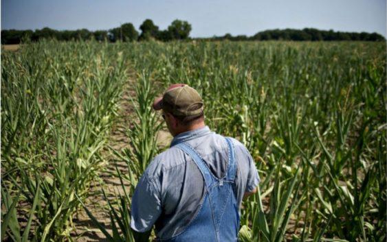 Обука на земјоделците за да добијат грантови