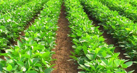 Органските производители да користат биоѓубрива