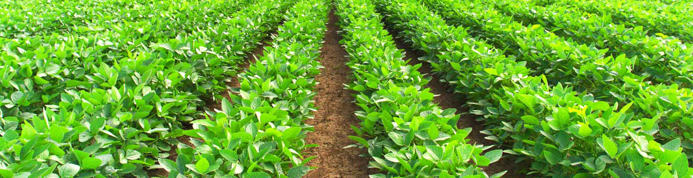 Photo of Органските производители да користат биоѓубрива