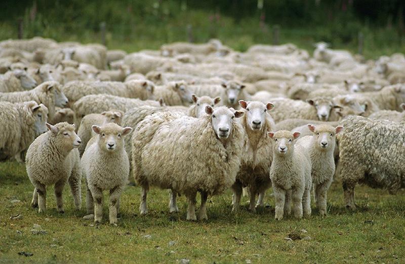 Photo of Пролетна преселба на стадата кон Бистра
