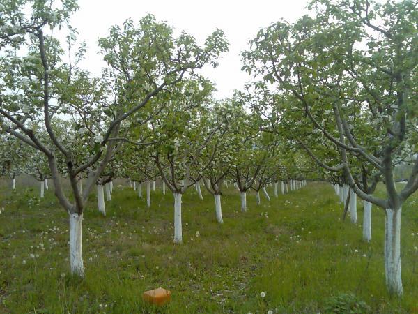 Photo of Променливото време штети за земјоделството