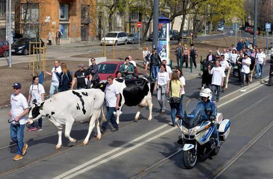 Протест на унгарски сточари во центарот на Будимпешта
