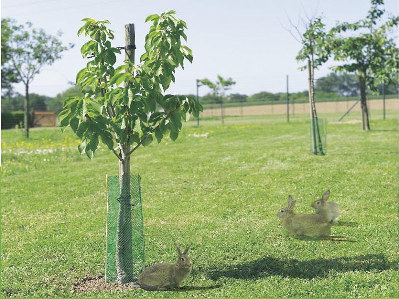 Photo of Штетите во земјоделството може да се пријават до 27 мај