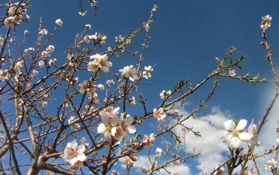 Започна со работа општинската комисија за проценка на штети од пролетните мразеви
