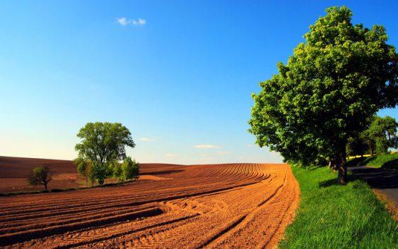 Годинава извршени 441 инспекциски надзор врз основа на Законот за земјоделско земјиште