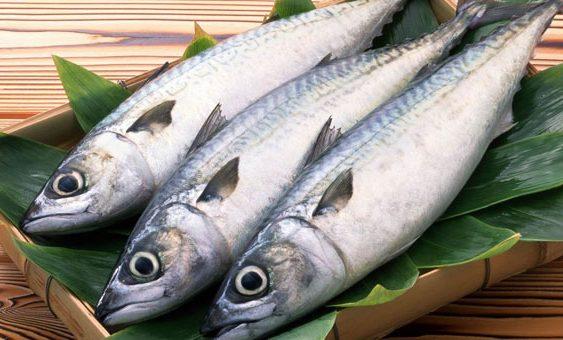 Одземени риби од угостителски објект во Охридско