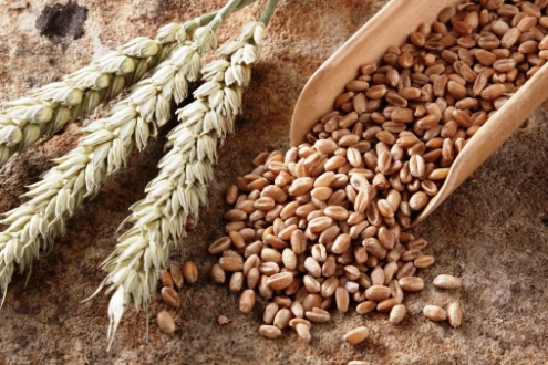 povisoki subvencii za upotreba na sertificirano seme