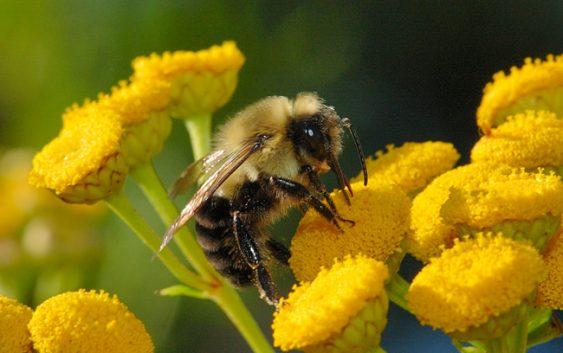 Поволен период за пчеларството што ветува родна година