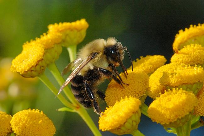 Photo of Поволен период за пчеларството што ветува родна година