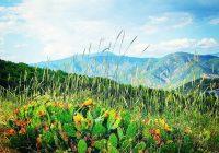 Се бара мед од кактусовата долина кај демиркапиското село Kлисура