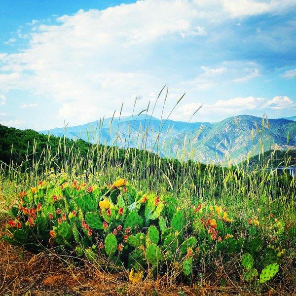 Photo of Се бара мед од кактусовата долина кај демиркапиското село Kлисура