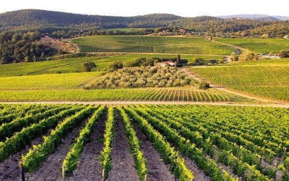 Се развива винскиот туризам