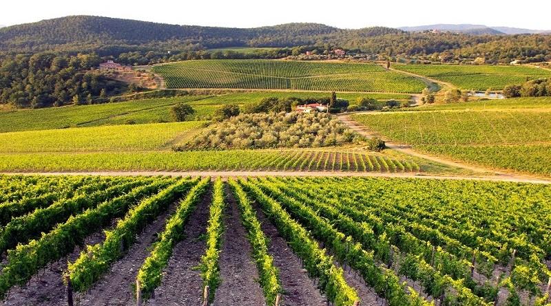 Photo of Се развива винскиот туризам