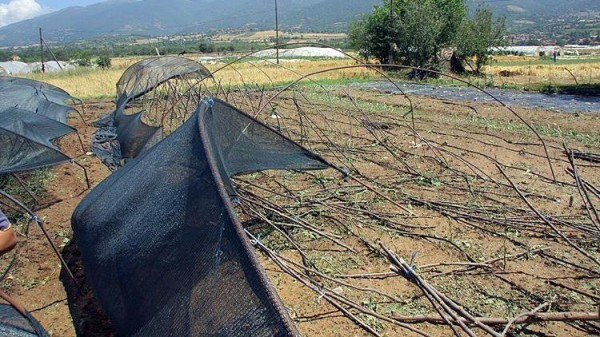 Photo of Сеуште слаб интересот кај земјоделците за осигурување на посевите