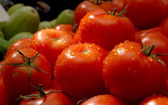 За 20 насто зголемен извозот на домати и на краставици